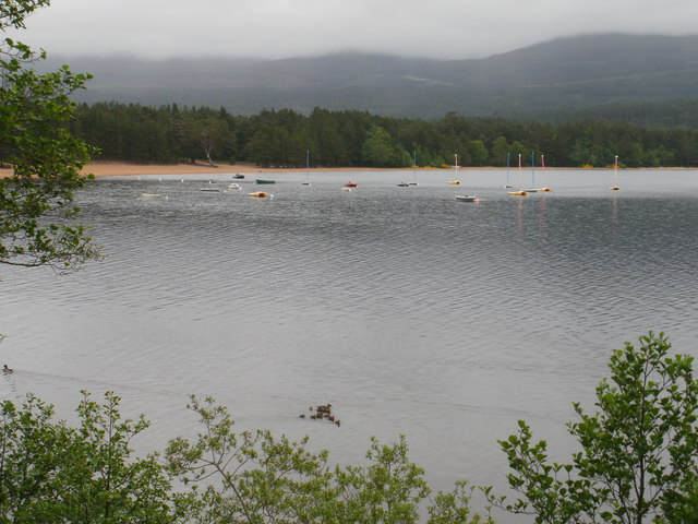 Ducks on Loch Morlich