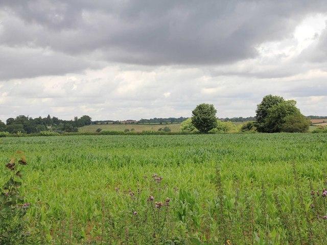 Fields north of Ell's Lane