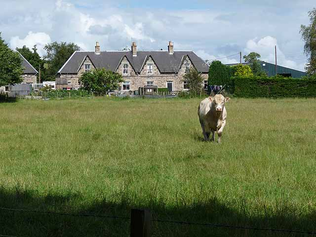 Bull and cottages at Crailinghall