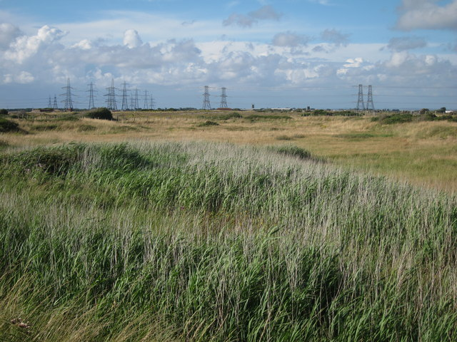 Reeds and grassland in Lydd Ranges