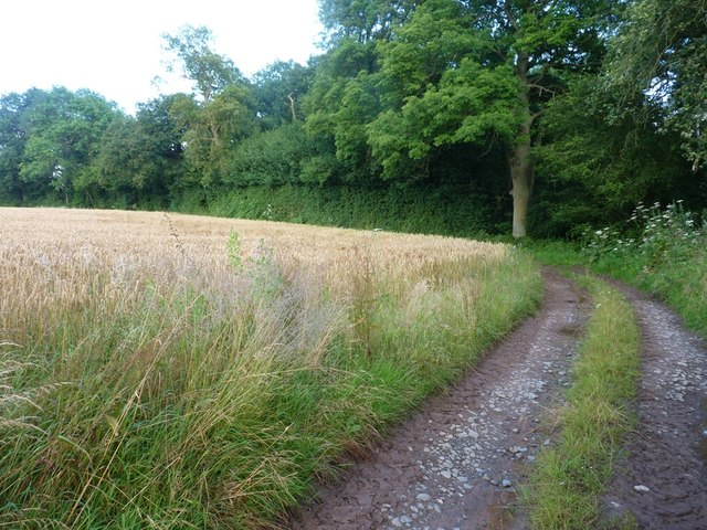 A sharp bend on the bridleway