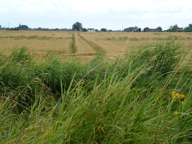 Farmland west of Delgate Bank