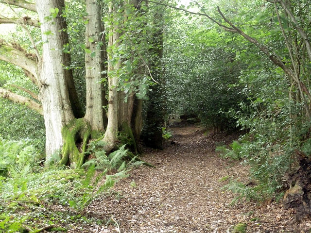 Footpath near Newlands Cottage