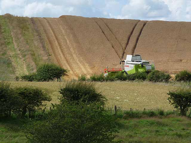 Combine harvester at Cessford
