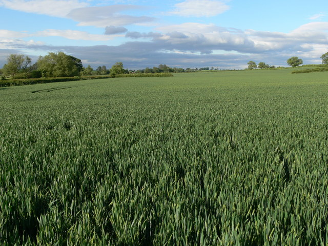 Farmland next to Gaddesby Lane