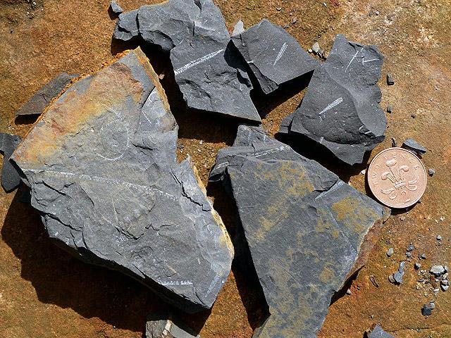 Graptolite fossils in Dob's Linn