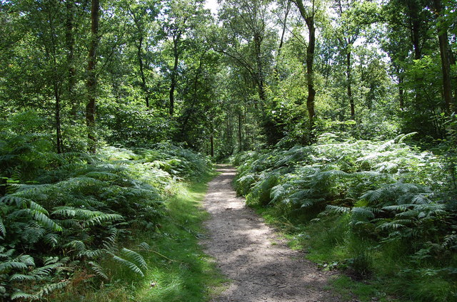 Path in Abbot's Wood