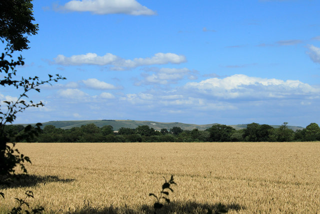 2012 : Wheatfield from the A342