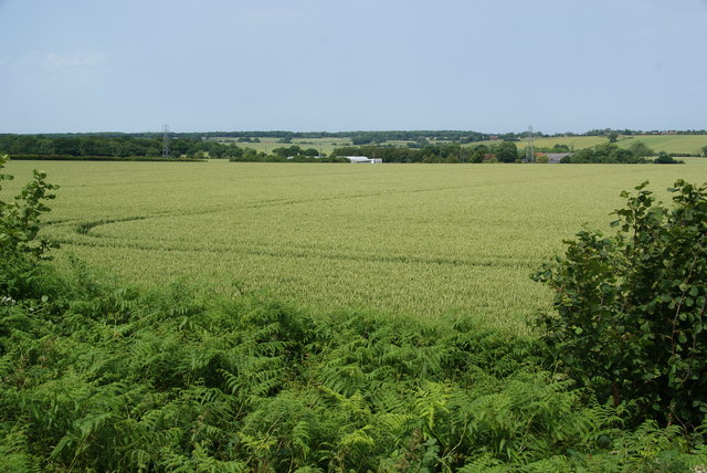 Green fields near Hersden
