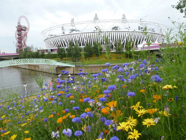 Stratford: wild flowers in the Olympic Park