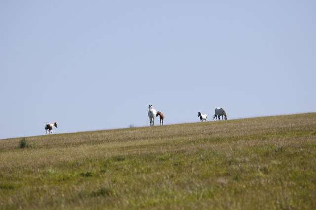 Ponies in profile...