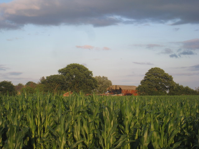 Maize and Holly Farm
