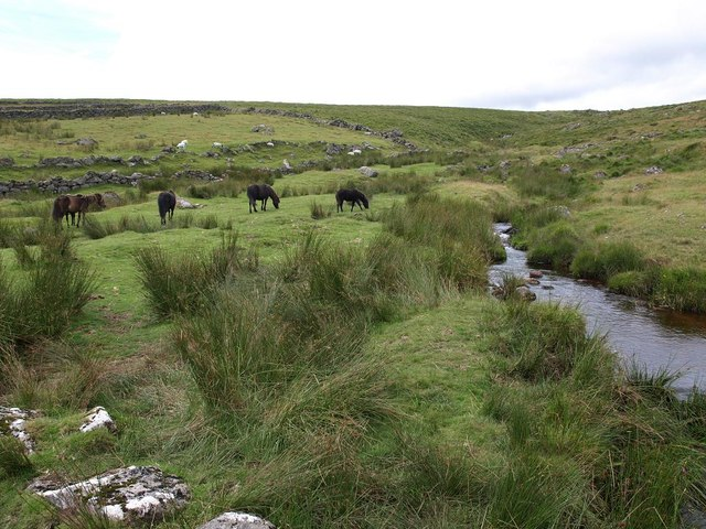 Horses grazing near Manga Brook