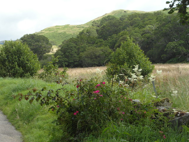 Roadside at Rhudle