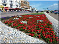 TQ8209 : Floral display at Hastings by pam fray