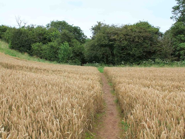Footpath towards Windmill Hill