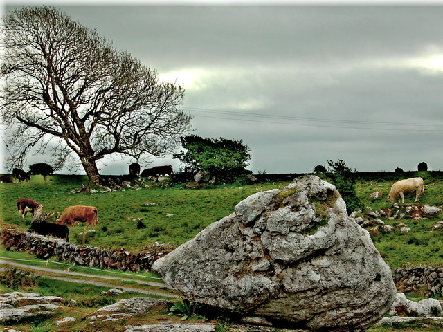The Burren - R480 - Stone, Road, Cattle & Tree near Poulnabrone Dolmen Site