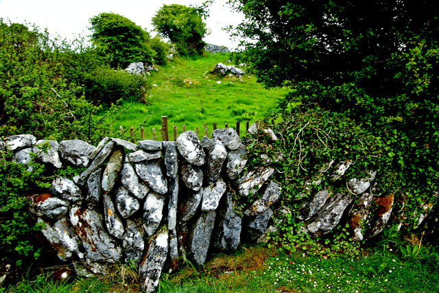 The Burren - R480 - Stone Wall, Shrubbery, Field near Poulanabrone Dolment Site
