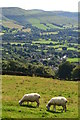 SK2184 : Sheep grazing above Bamford by Neil Theasby