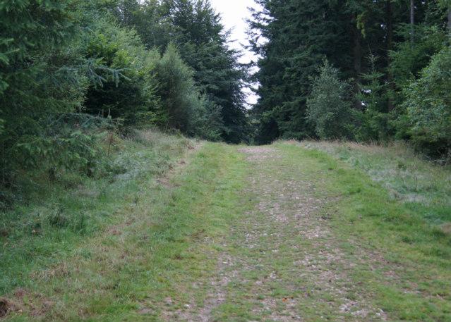 Coniferous woodland ahead