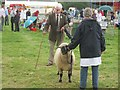 SO6068 : Tenbury Show by Richard Webb