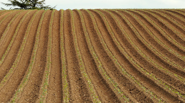 Ploughed field, Reagh Island near Comber