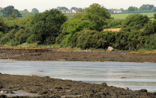 Inter-tidal mud, Reagh Island near Comber (1)