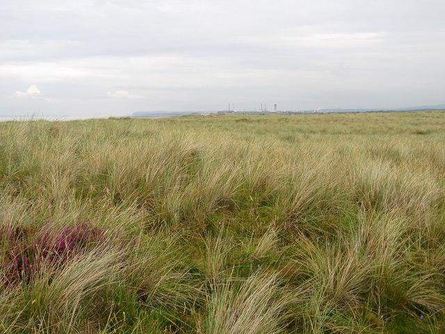 Dunes behind Drigg foreshore