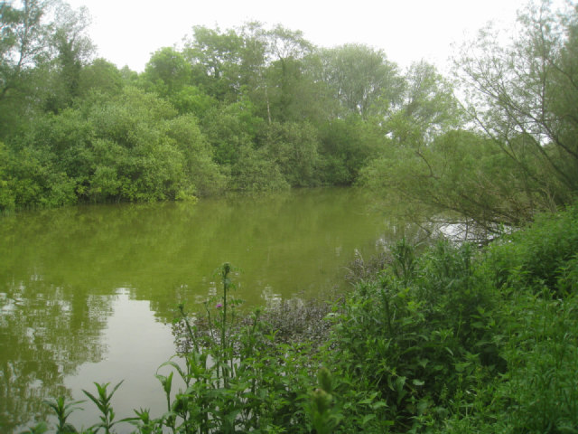 Ponds alongside the River Test