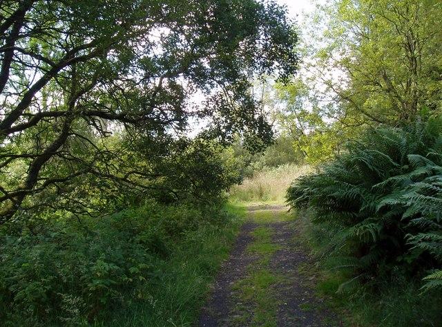 Forest Track near Laird's Loch