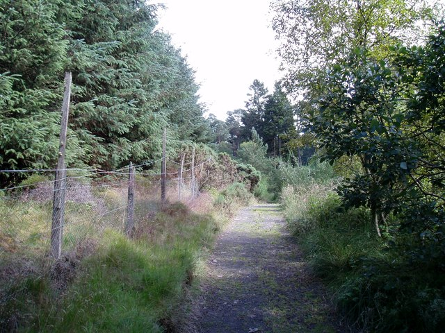 Forest Track near Laird's Loch