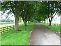 ST8590 : Driveway to Down Farm by Nigel Mykura