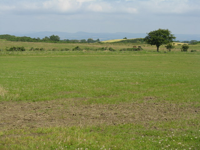 Clover Field near Ochil Tree Mill