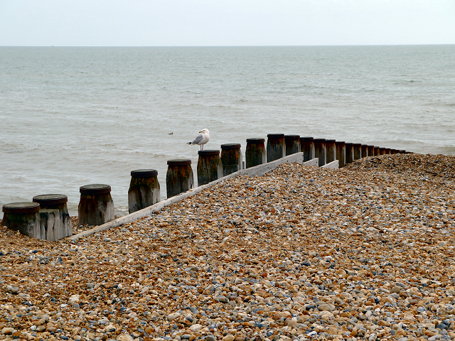 Gull on Groyne, East Beach