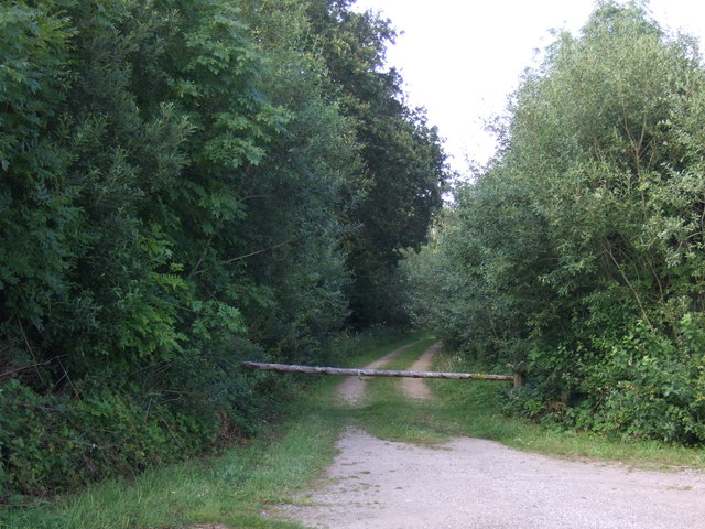 Track into Ropsley Rise Wood