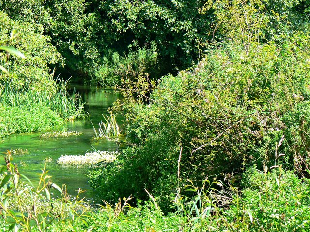 A closer view of the Ampney Brook, Ampney St Peter, Gloucestershire