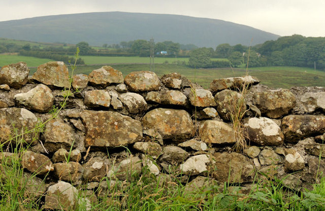 Drystone wall near Larne