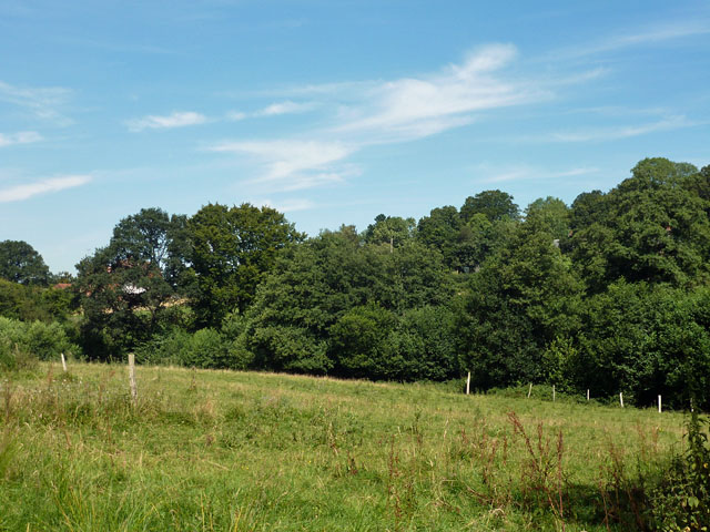 Field by Buckhurst Lane