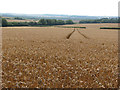 TL6146 : Harvest time in East Cambridgeshire by John Sutton