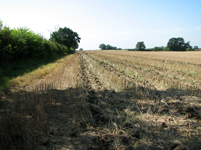 Footpath along a field boundary