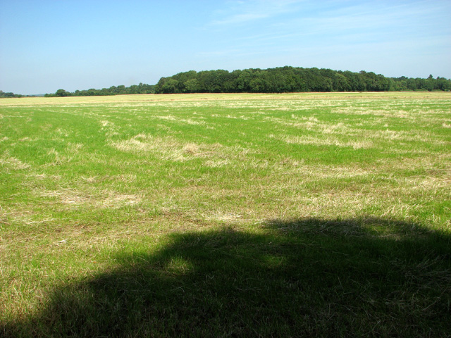Hay meadow west of Saxlingham Grove