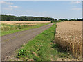 TL6147 : The Roman Road east of Horseheath by John Sutton