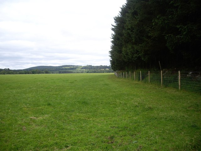 Eastern edge of Haugh Plantation