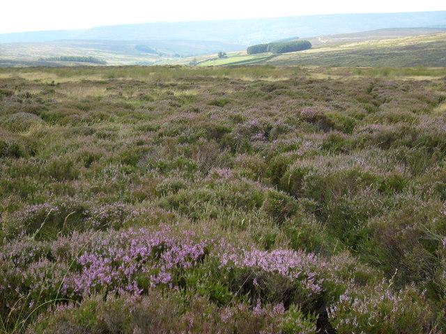 Snilesworth Moor