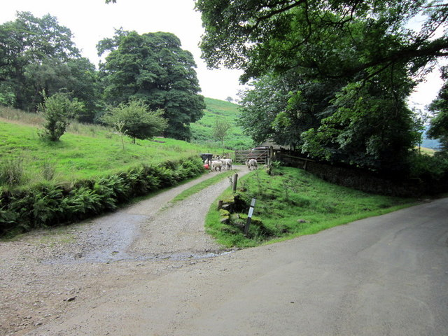 A farm access road at Cattis Side