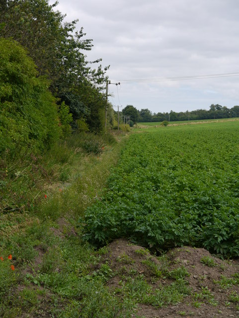 The Edge Of Birgham Wood