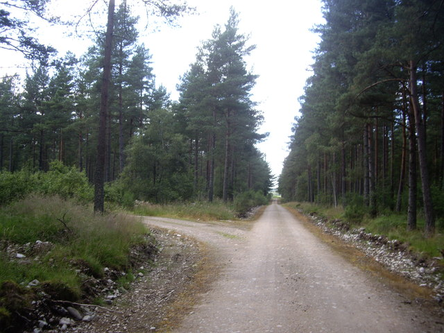 A track west through Carlogie Wood
