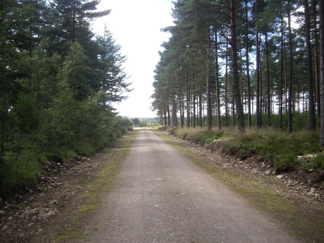 Close to the western edge of Carlogie Wood
