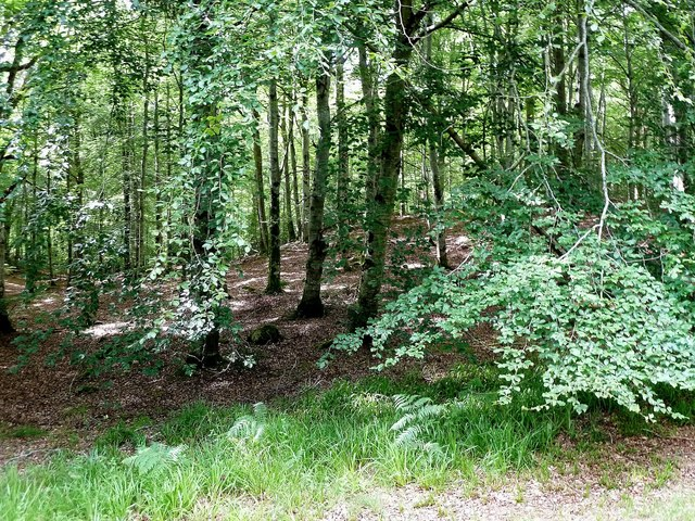 Estate Woodland