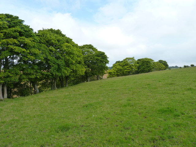 Trees along the Wilkieston burn